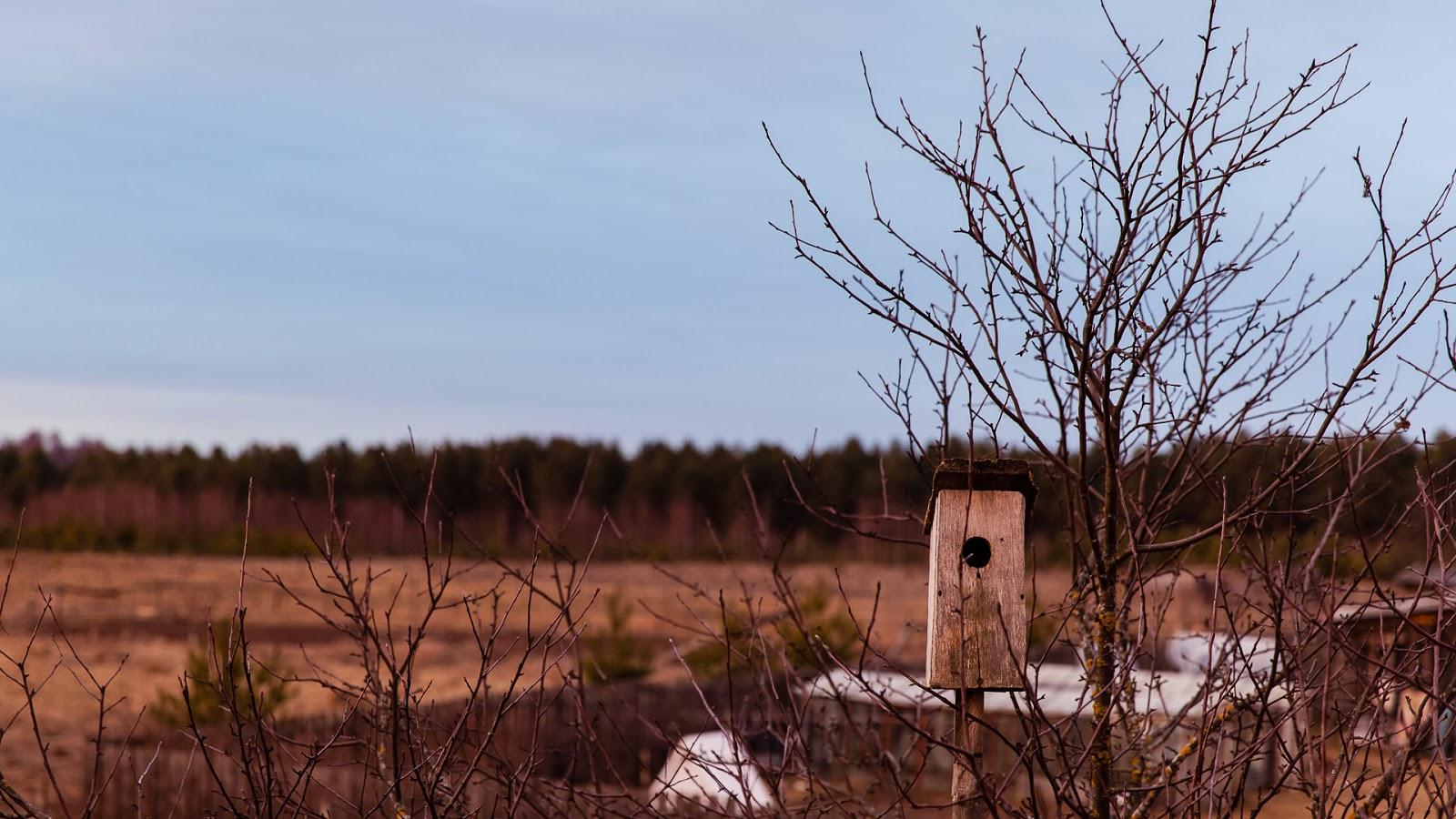 Отдых весной в деревне и конные прогулки.