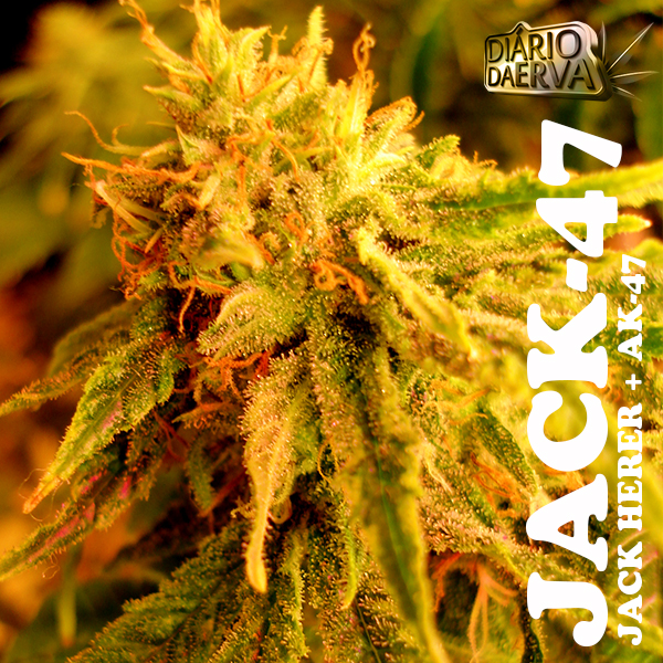 Jack 47