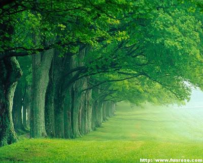 Galaxy Pics Green Nature Wallpapers
