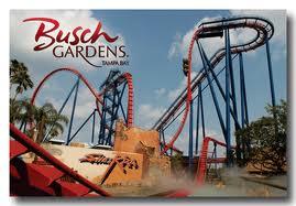 Sheikra at Busch Gardens
