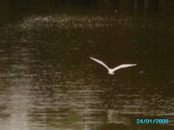 Garza (Egret) over the Lakes of Xalapa