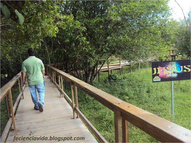 Hombre, Caminando, Puente