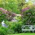 An Early Summer Garden Tour