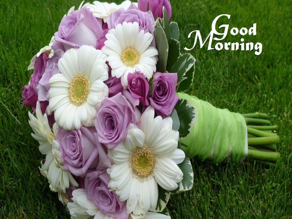 Good Morning Flowers Images : White and pink flowers photos of good morning festival