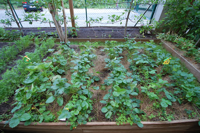 Vertical Double Cropping strawberry tower and tomatoes