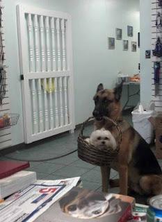 Anjing bawa Anjing