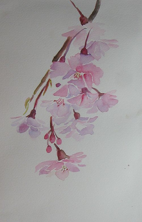 How To Draw A Cherry Blossom Tree In Pencil ...for my weeping cherry tree.