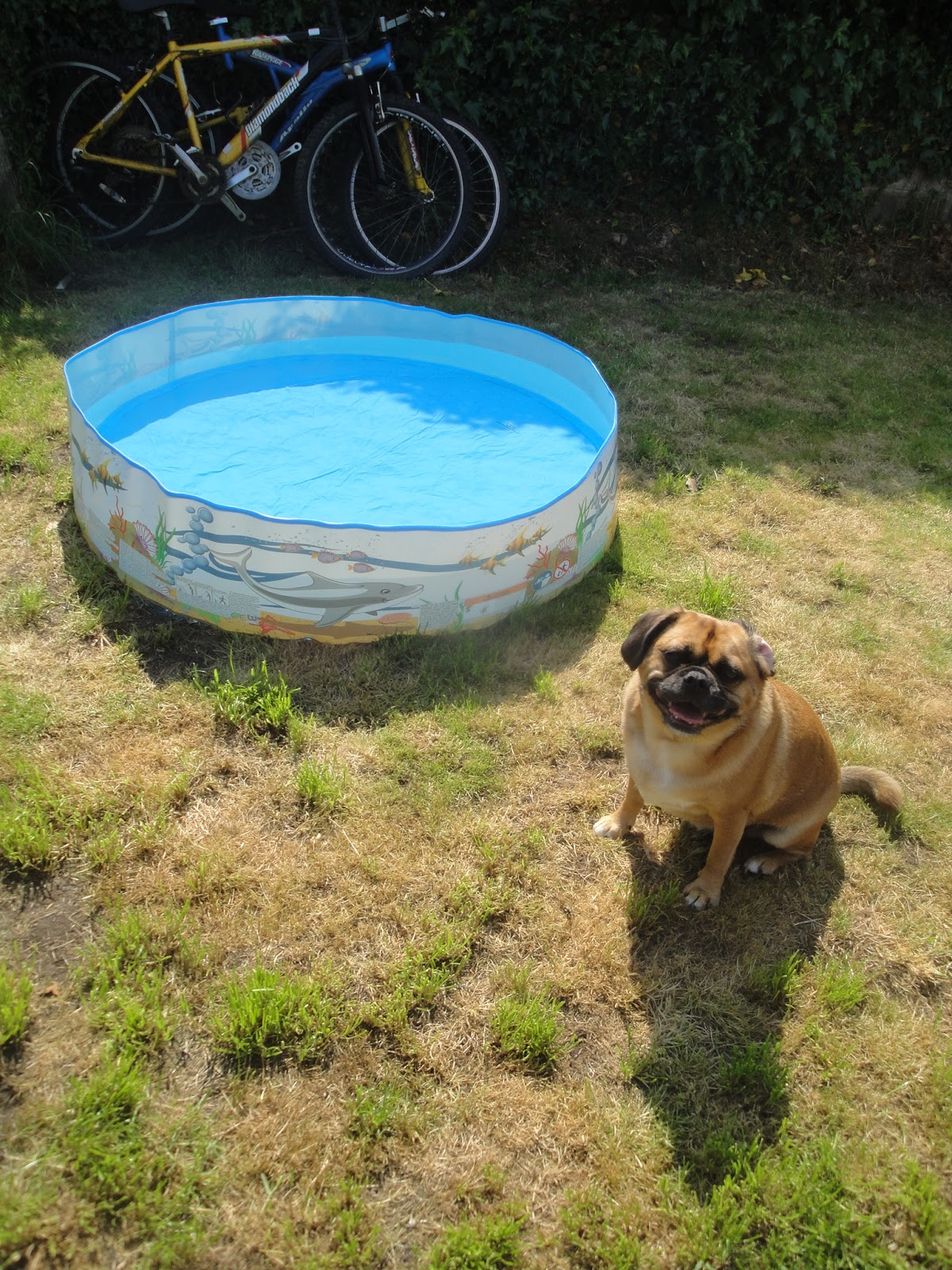 The adventures of the tank puggy paddling pool for Biggest paddling pool