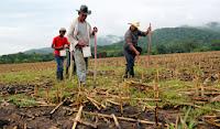 Olanchito,Yoro,agricultura,Honduras
