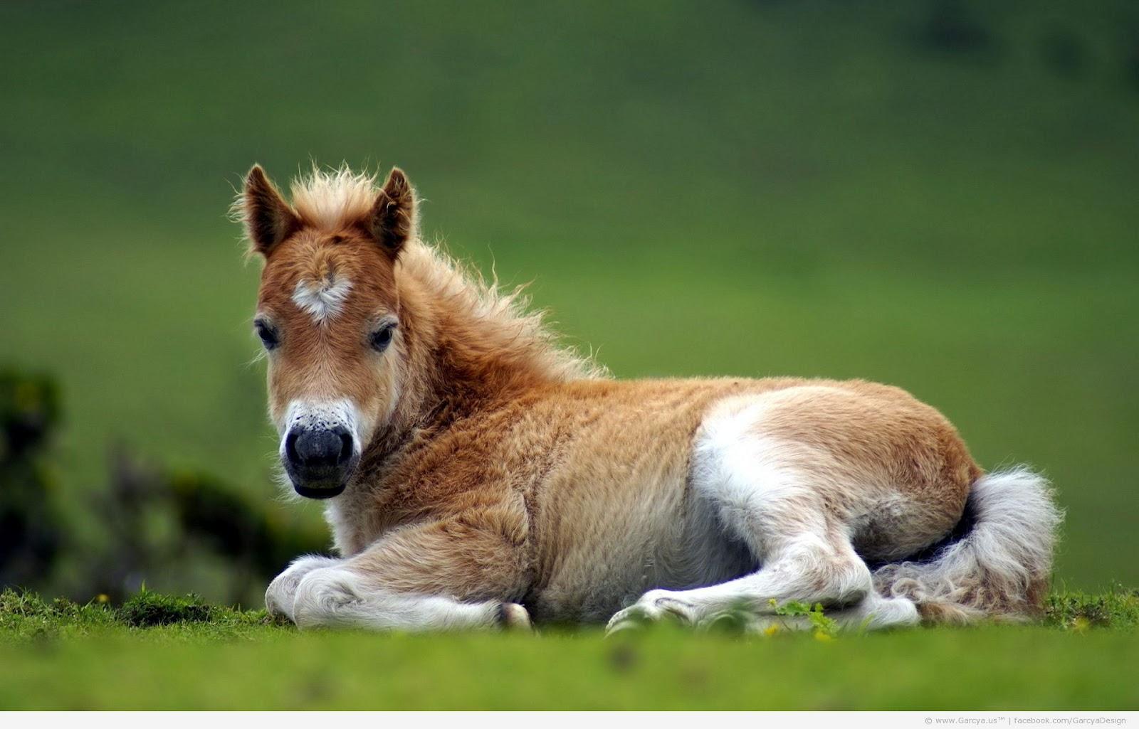 Gambar Anak Kuda Unik, Aneh, Lucu, Dan Imut Banget