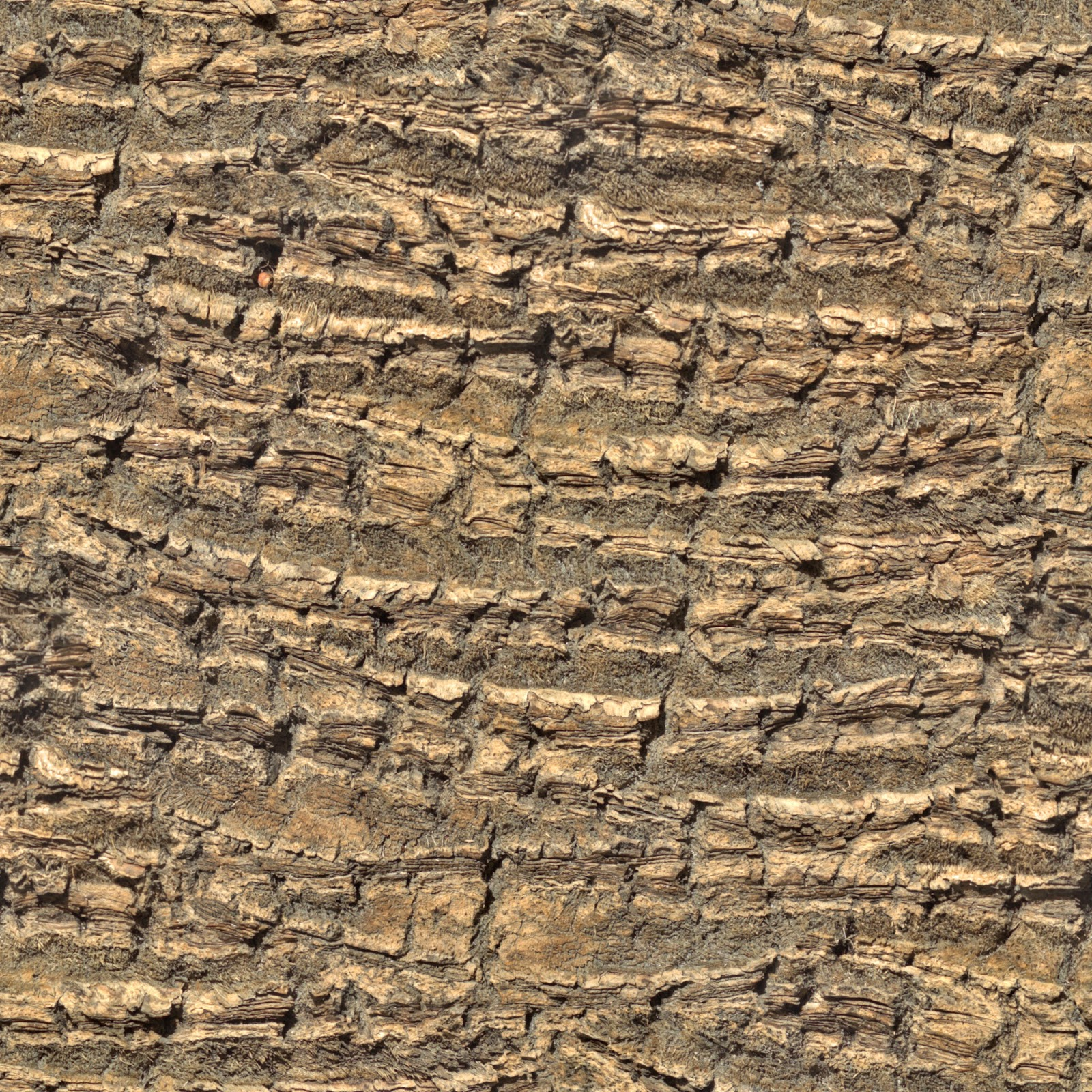 Tree bark palm tree seamless texture 2048x2048