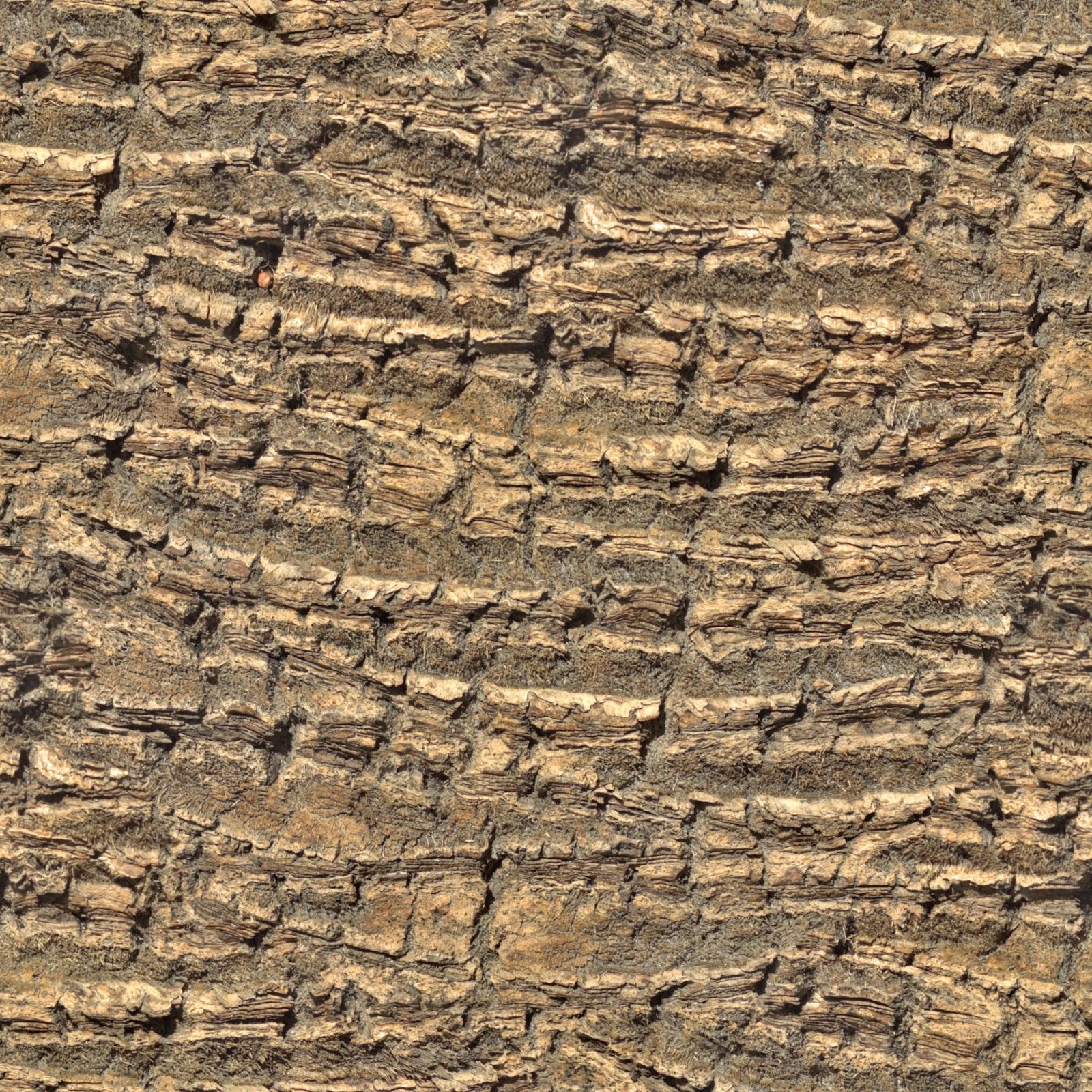 Tree bark palm tree seamless texture 2048x2048