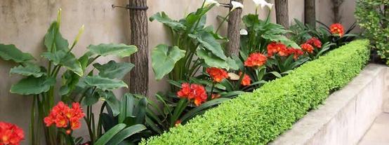 plantas de jardim resistentes ao solUm jardim para cuidar Flores no