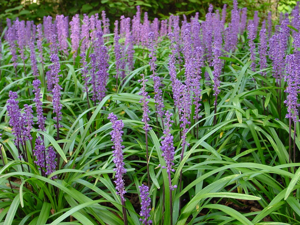 Image Result For Monkey Grwith Purple Flowers