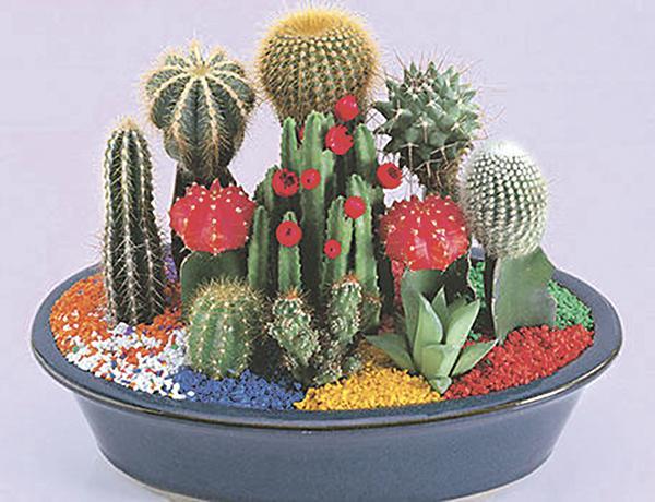 Tipos de cactus jardines mini de cactus for Clases de cactus