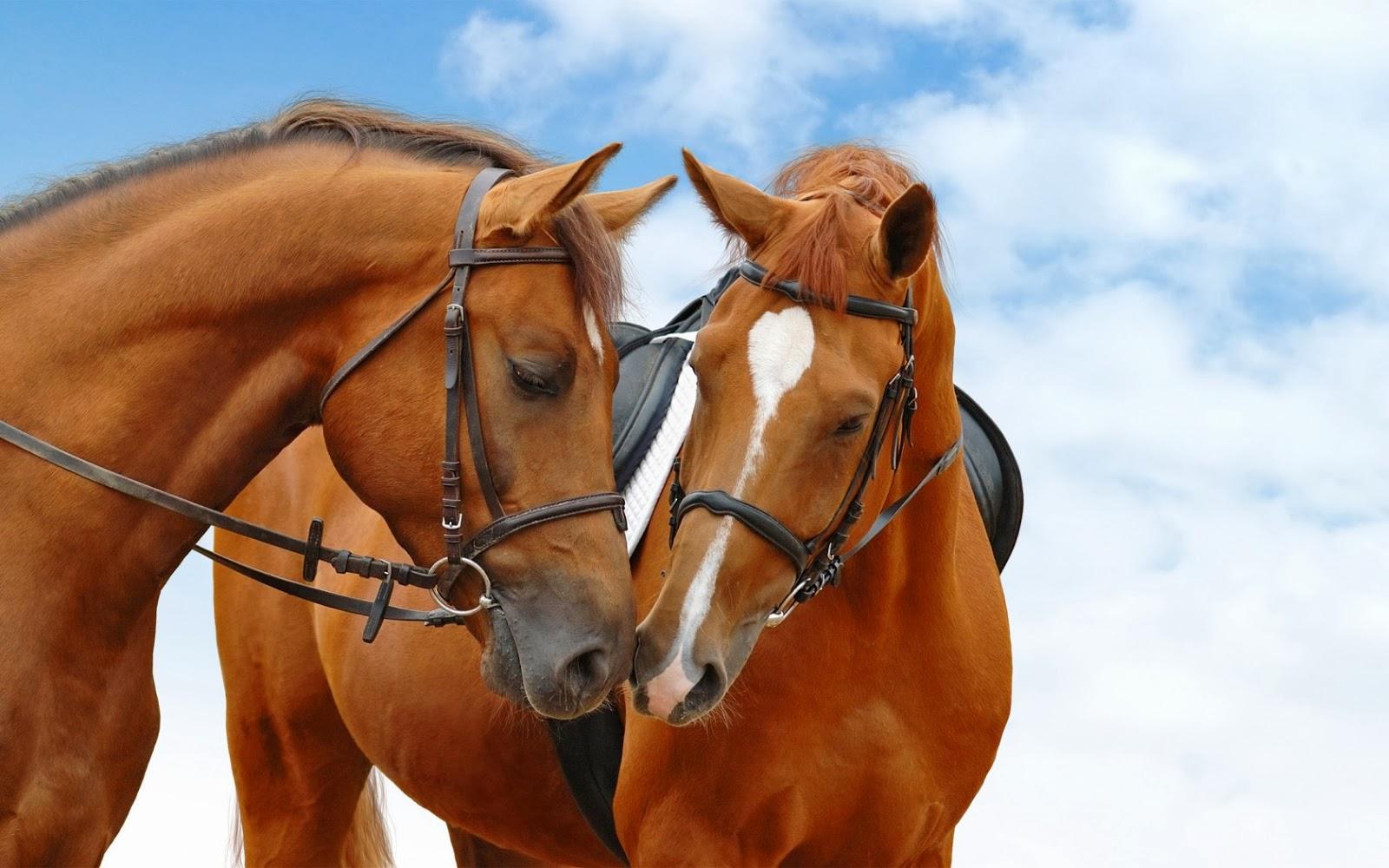 hermosos caballos bajo el cielo azul