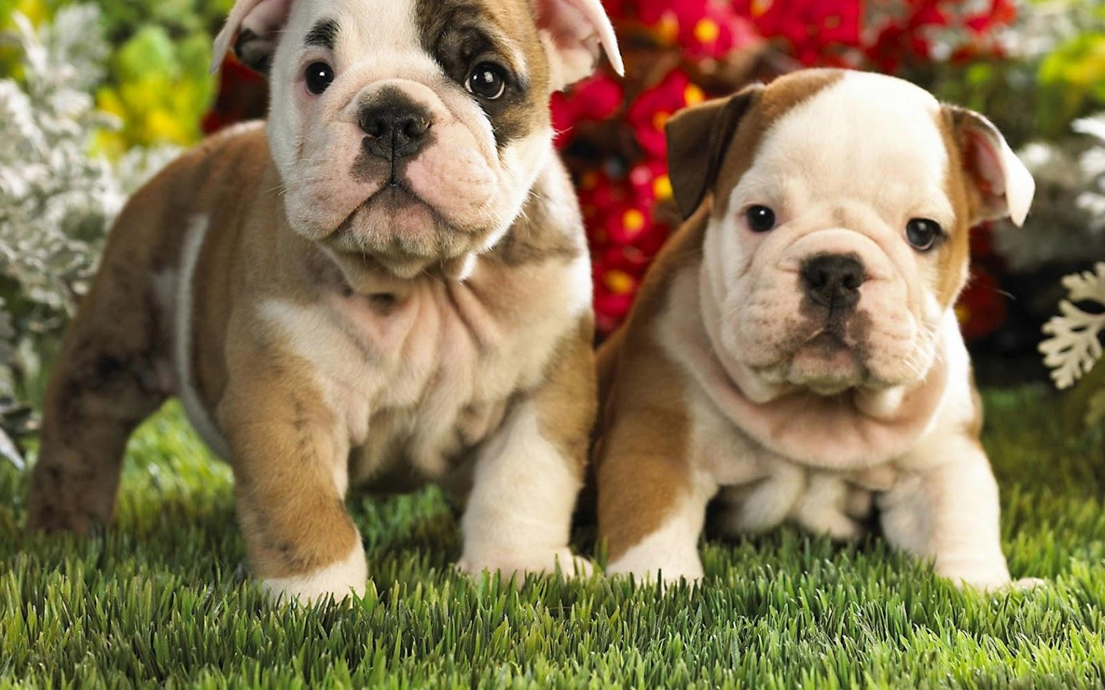 Imagenes de perros hermosos fondos de pantalla for Fondos de pantalla de perritos