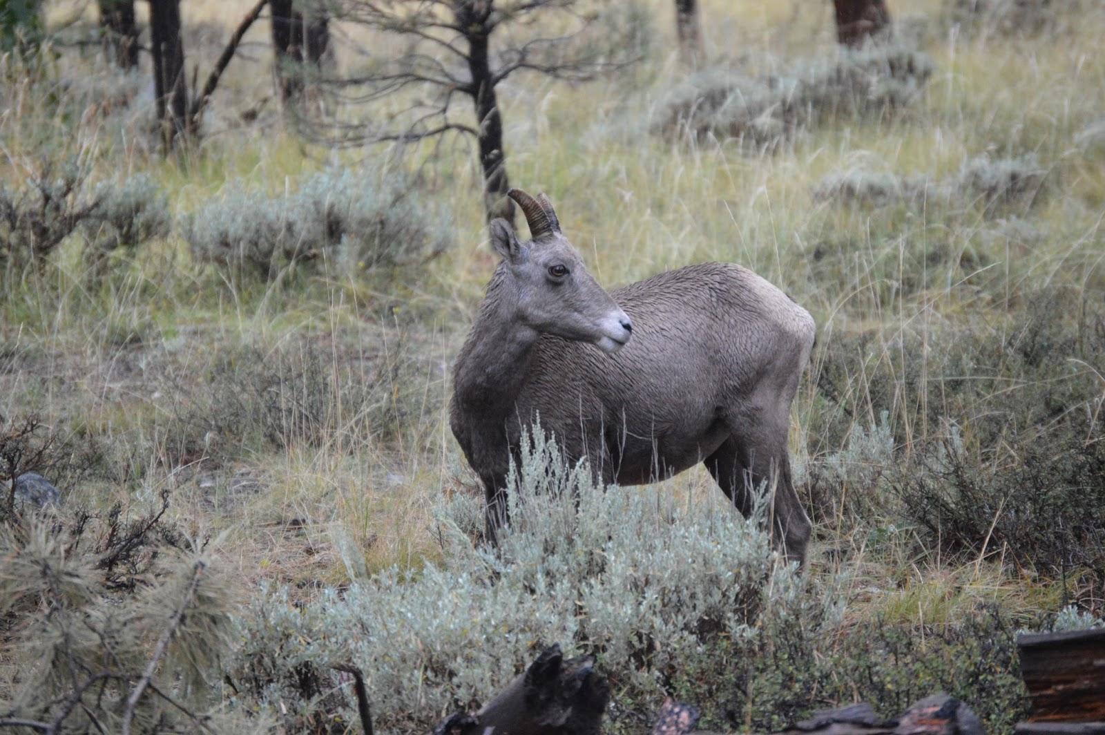 red deer hook up sites