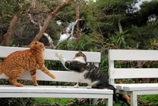 Cats from Athens Greece
