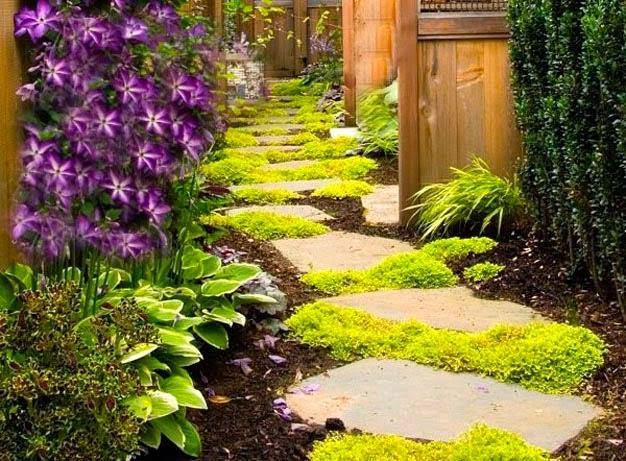 Plantas perfeitas para plantar em um jardim