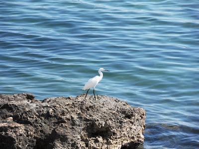 Heron waiting for us at Santa Eulalia