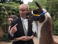 Dave the llama