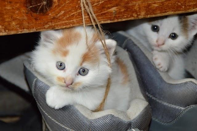 5 Fakta Menarik Tentang Kucing