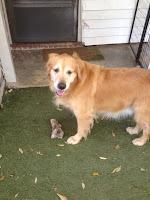 champ-jones-enjoying-his-playtime-at-foxmoor-pet-care