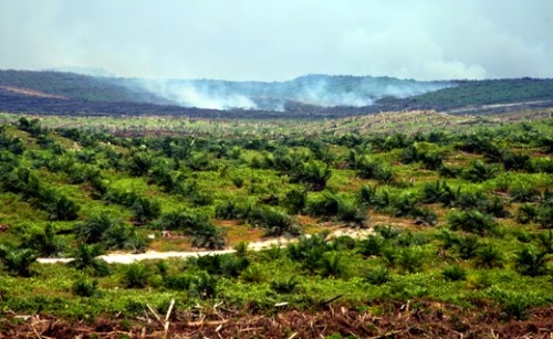 Fires associated with clearing land for oil palm plantations in the Indonesian province of Riau release massive amounts of carbon into the atmosphere and spread health-harming haze across the landscape. (Credit: Wakx/flickr) Click to Enlarge.