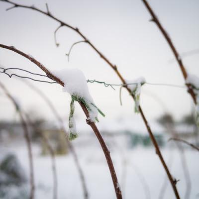 Snow on the allotment 2013, #3 © Graham Dew