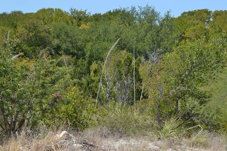 While On A Walk: Leon Creek Greenway, Bamberger Nature Park Trailhead, South