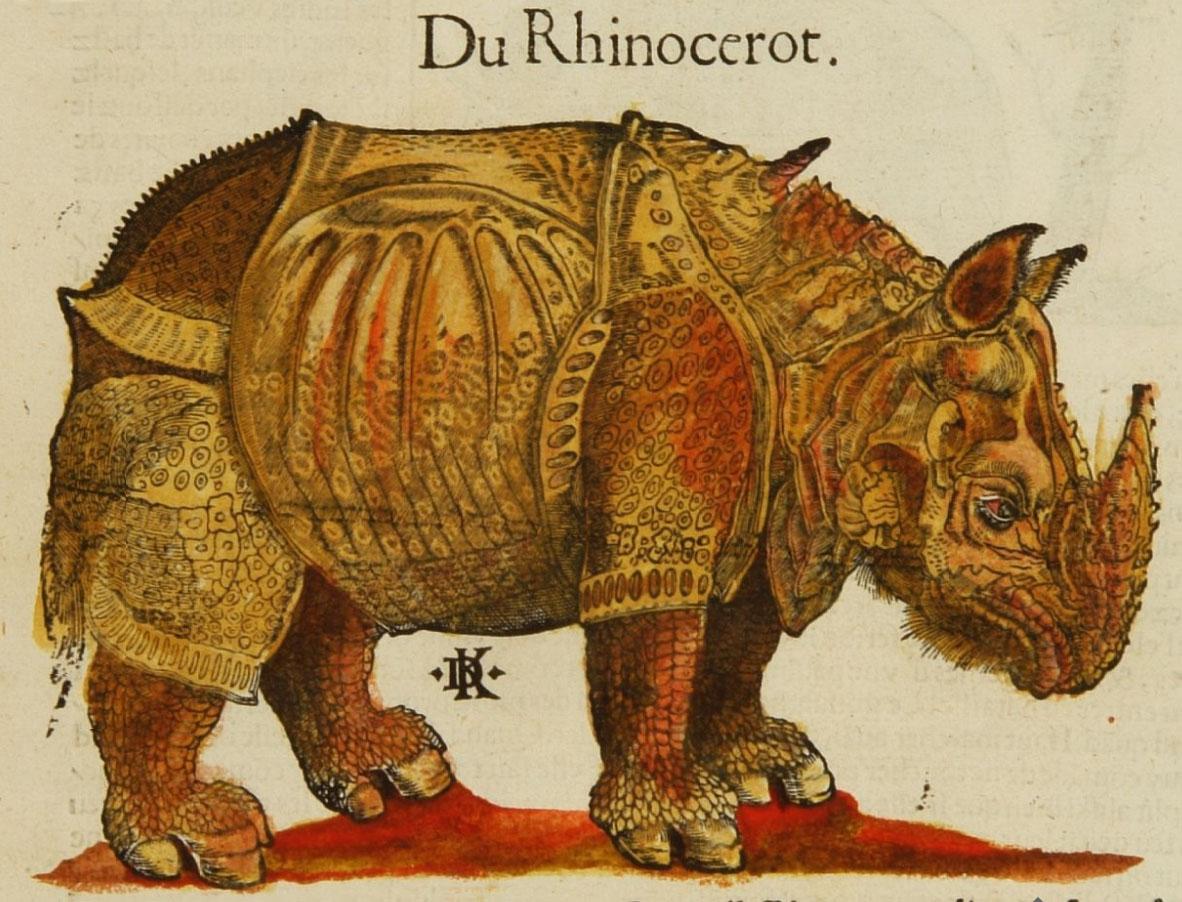 http://4.bp.blogspot.com/-AR8MGn_qKgQ/TaXf4rtRYBI/AAAAAAAAA9s/2bLnb6FTH28/s1600/rhino+16+Sebastian+Mu%25CC%2588nster+cosmographie-1580.jpg