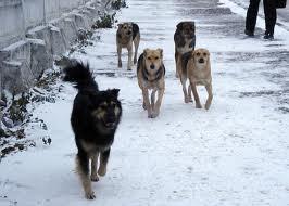 Беспризорные собаки в городе