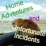 Home Adventures and Unfortunate Incidents