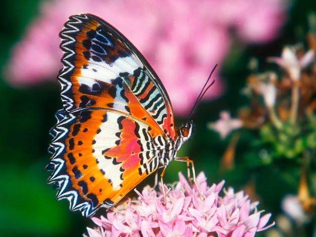 """<img src=""""http://4.bp.blogspot.com/-ARJw9BeFBZE/Uq2_yxsqShI/AAAAAAAAFj0/oaB2j420eog/s1600/xvc.jpg"""" alt=""""Butterflies wallpapers"""" />"""