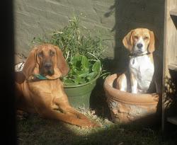 """Mis perras """" plantadas"""" !!!"""