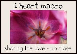 http://www.shinethedivinecreativityisaspiritualpractice.com/2013/10/i-heart-macro-week-23.html