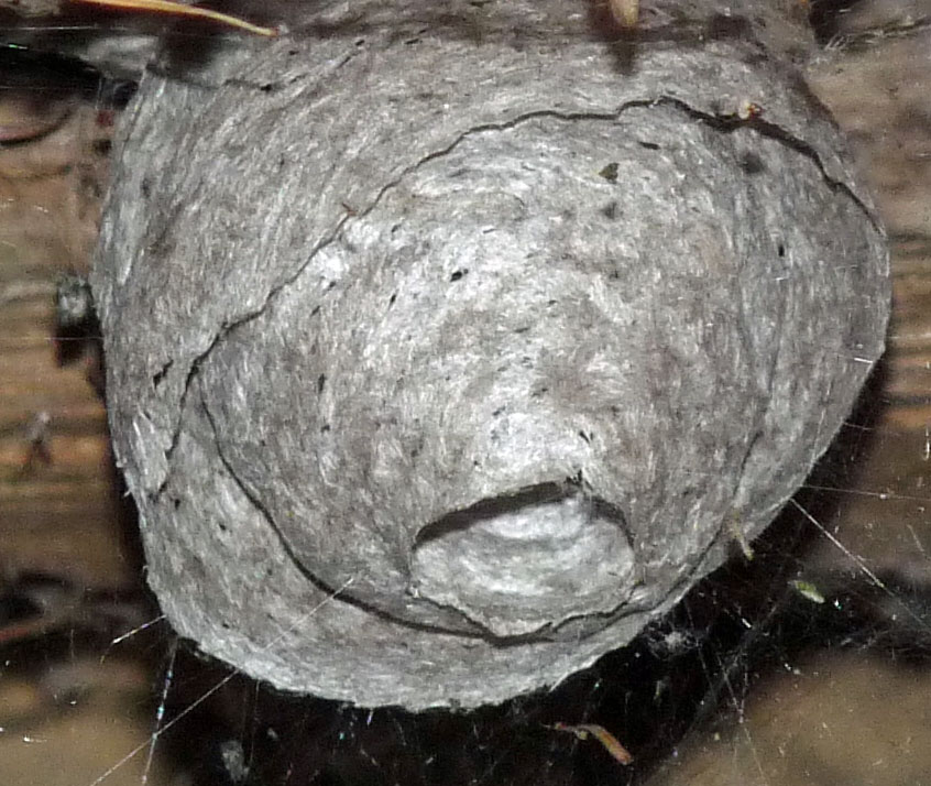 the wasps nest poem commentary The fact that the workers in hymenopteran social insect colonies (ants, bees, wasps  it for social or political commentary,  poem theogony has a.
