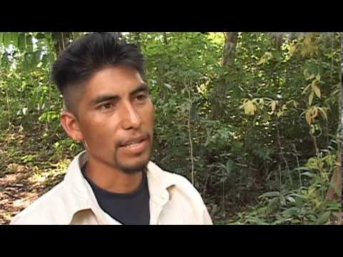 REDD: La codicia por los árboles. El caso Chiapas: la selva Lacandona al mejor postor
