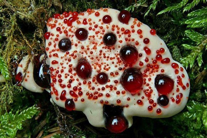 Remédio de gente de fungos de pé