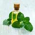 7 Beneficios del Aceite de Menta (Hierbabuena)