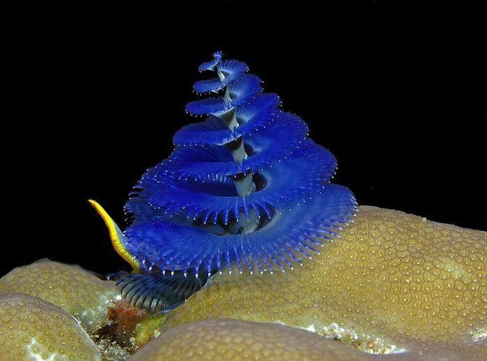 Beautiful Sea Animals ...