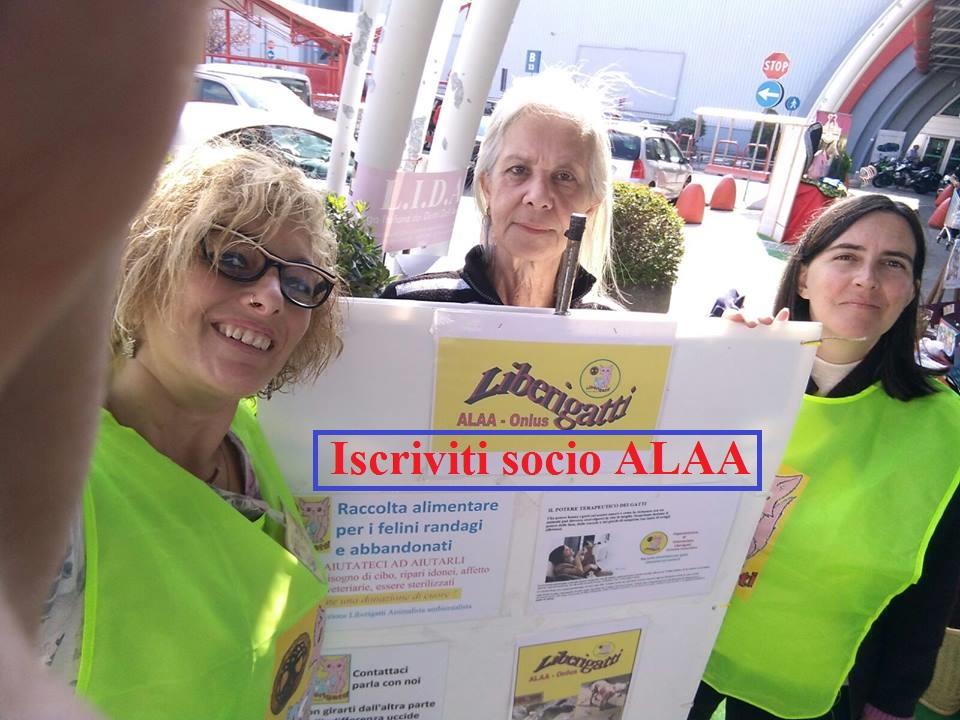 """Volontarie """"Liberigatti"""""""