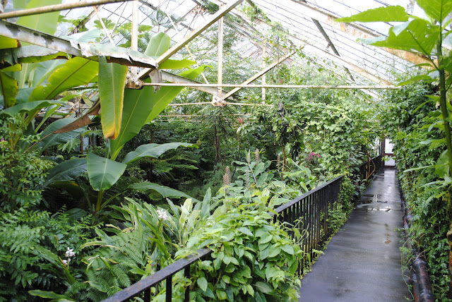 The Tropical Ravine Botanical Garden