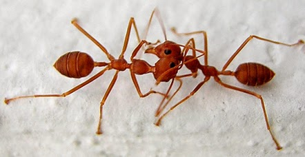 Serangga Dengan Kemampuan Paling Unik