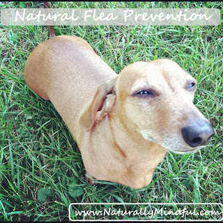 Naturally Mindful's Natural Flea Protection.
