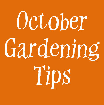 Gardening With Red Hill Tips For Your Garden In October