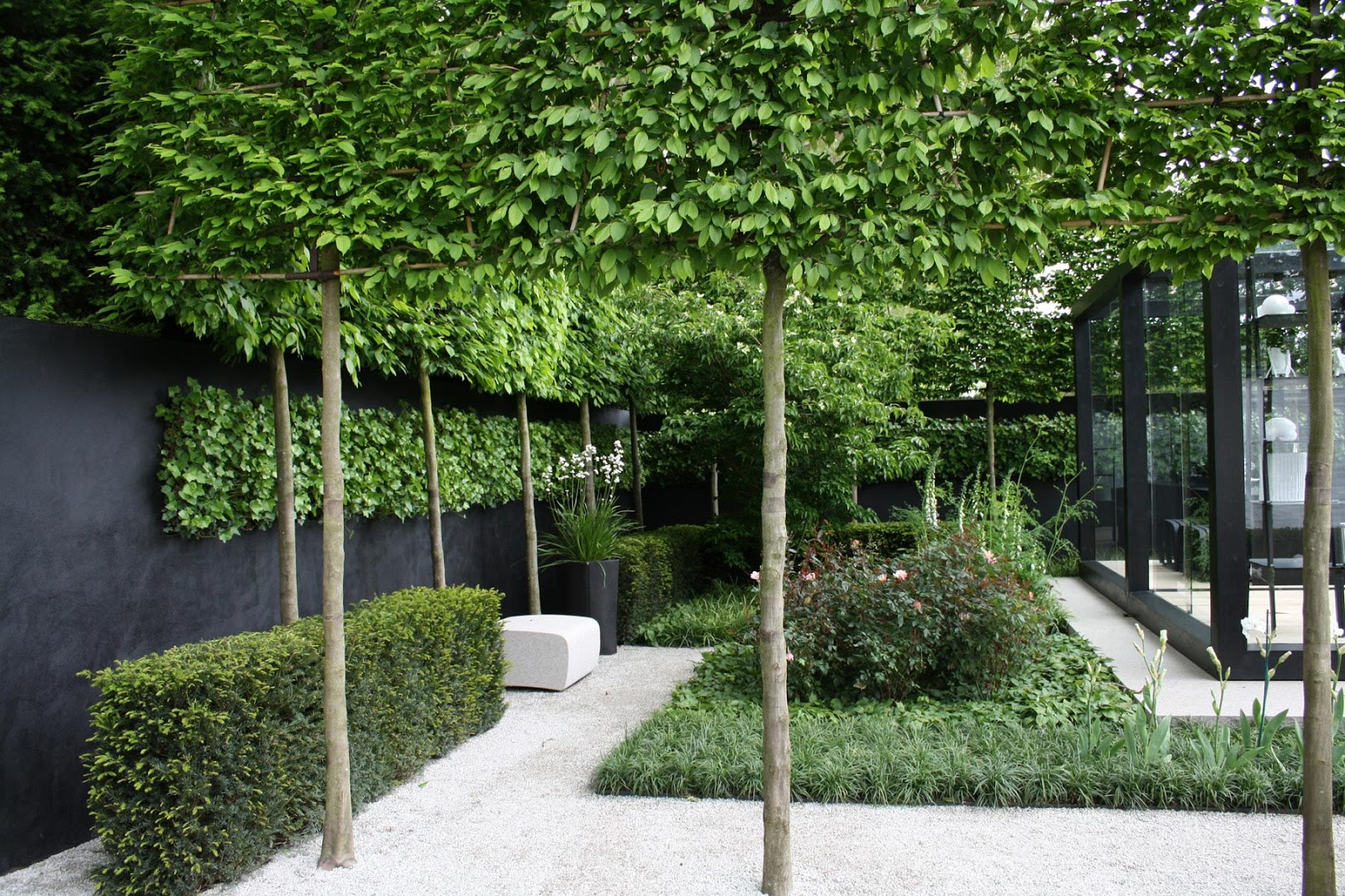 David dangerous pleached trees stilted trees raised for Garden trees types