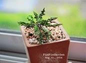 http://finfingarden.blogspot.com/2014/12/euphorbia-decaryi-cactus-cacti-nature.html