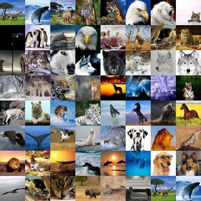 ZONAS CLIMATICAS EN MEXICO Fondos_animales_collage